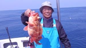船長上野のカサゴ50cm