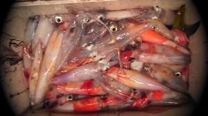 饗庭さんのマイカ釣果